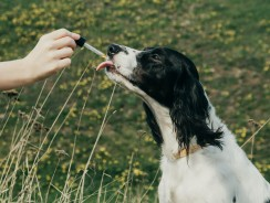 Is CBD Oil Beneficial For Dogs?